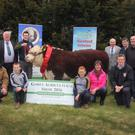 The Gorey Show committee and supporters and hereford breeders have welcomed Slaney Foods International as the major hereford sponsor at this year's show