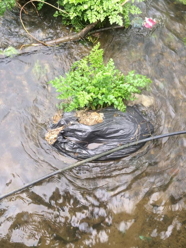 The dead sheep found in a black bag dumped in the river