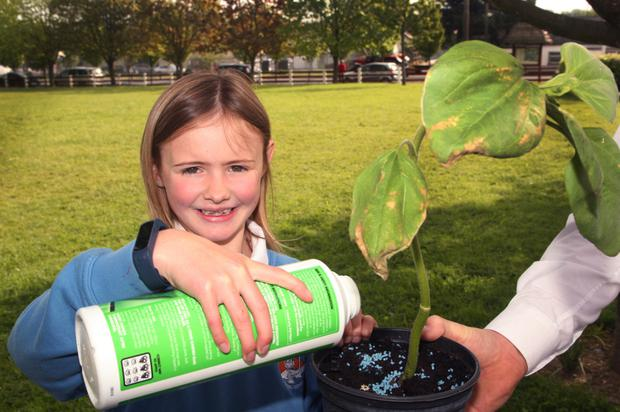 Sarah Cloke, who sold sunflower plants that she grew from seeds in support of autism unit