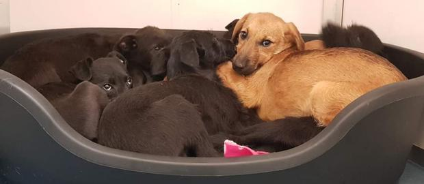 The seven puppies of mixed breeds that are all now recuperating at the North Wexford SPCA