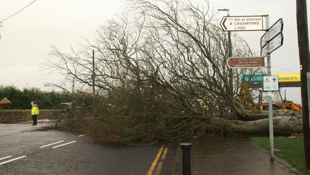 A tree felled by Storm Brendan across the main road in Camolin yesterday (Monday)