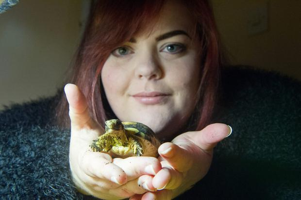 12th November, 2015.Ciara Morrisson with 'Stomp' one of her marginated turtles at their home in Teltown, County Meath.Photo:Barry Cronin