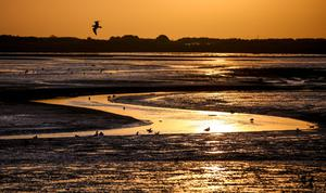 Sewage is flowing into Bull Island nature reserve
