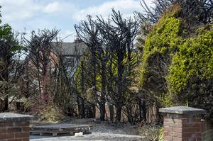 The damaged trees outside the garda's family home