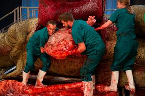 Dr Steve Brusatte and Matthew T Mossbrucker lift the stomach out of the body as they take part in an autopsy of an anatomically complete recreation of a Tyrannosaurus rex for a documentary to be broadcast this weekend