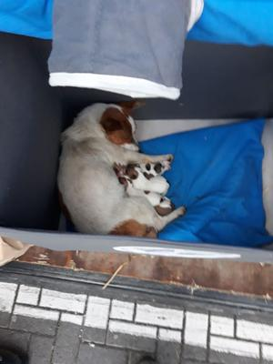 The seized dogs include two litters of Jack Russell puppies and their mothers