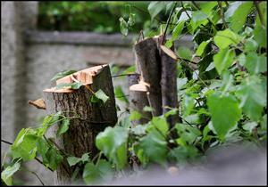 Trees cut at the front of No 37A Highfield Road