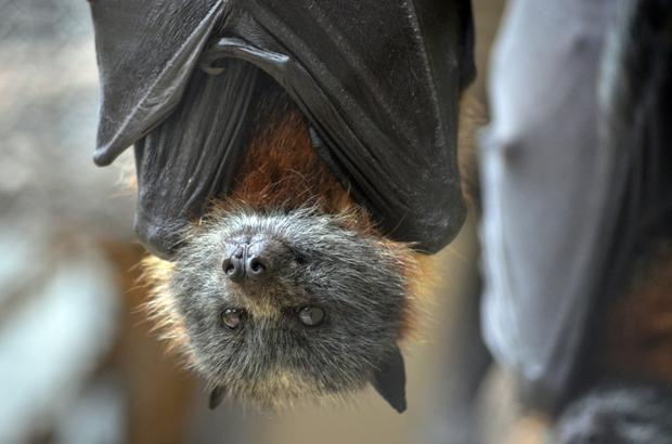 Bats are protected by EU law