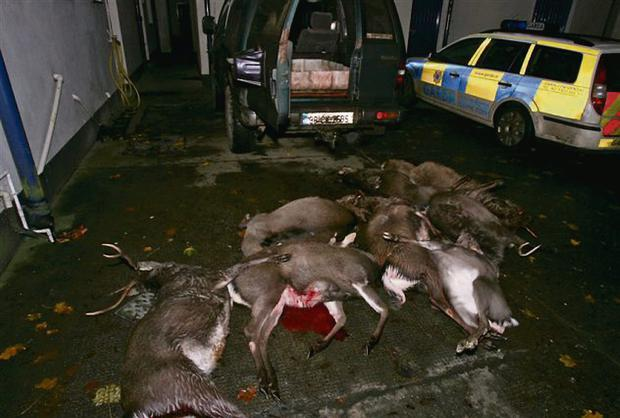 GRUESOME: Deer shot by poachers in the Dublin and Wicklow mountains