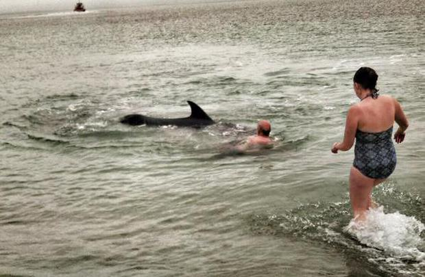 Fergus Finlay attacked by dolphin