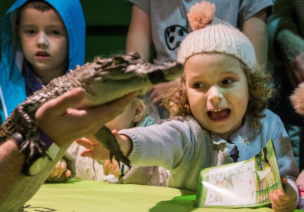 Stefania Najdoska age 4 looking at a Crocodile from the National Reptile Zoo