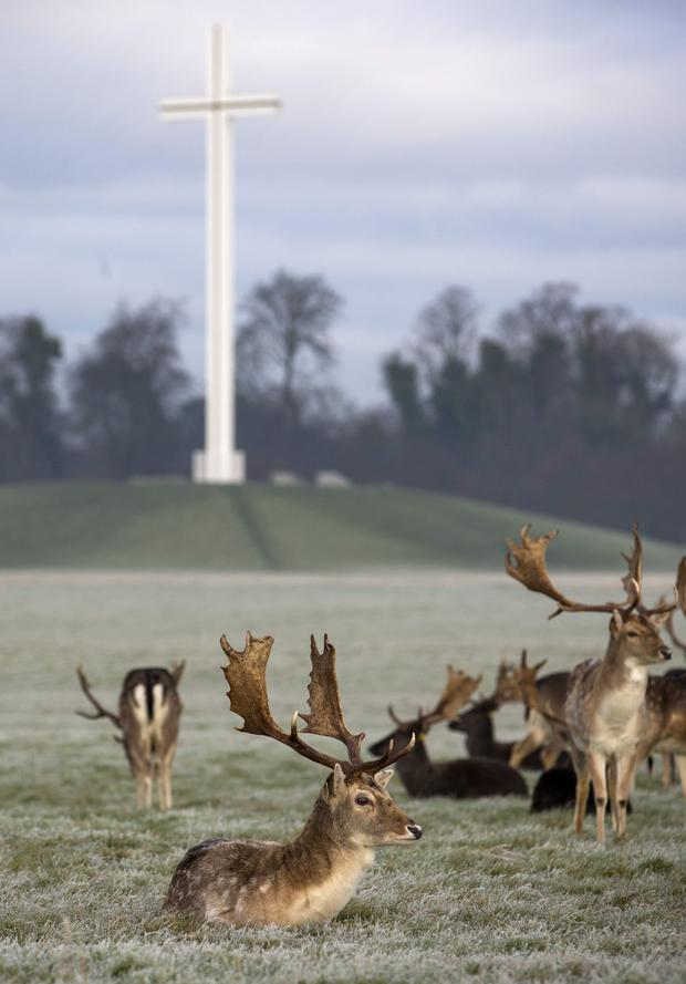 Wild Deer roaming in Phoenix Park