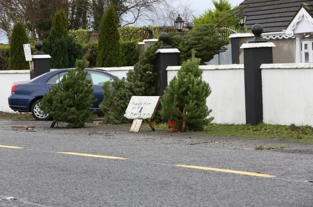 Trees for sale outside the house in Limerick