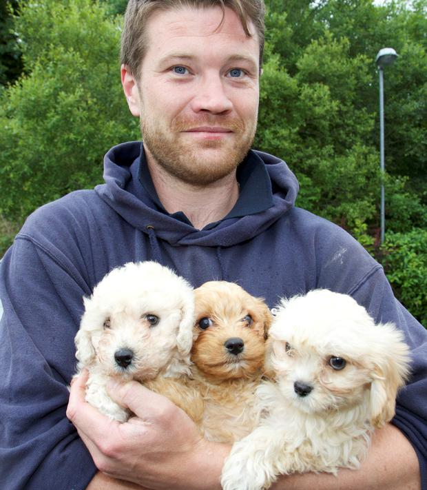 Gerard Griffin of the ISPCA with some of the seized puppies Picture: Michelle Ghee