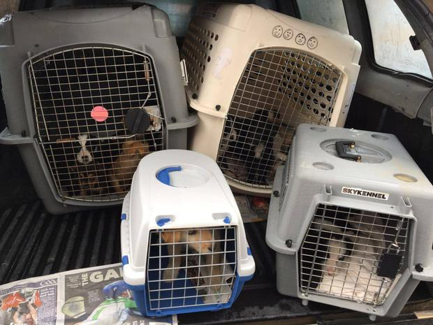 Some of the puppies seized at Dublin Port