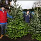 Nathan Warren and Harry Small with their selection of Christmas Trees for sale at the Supervalu Killester Howth Road Junction.