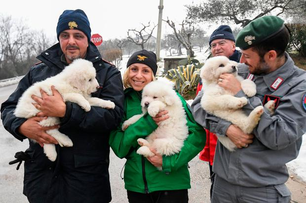 Rescue personnel with the pups that survived the avalanche