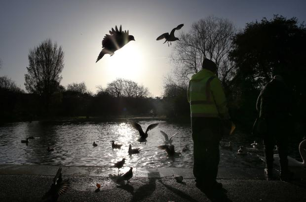 A man feeds the birds in St Stephen's Green