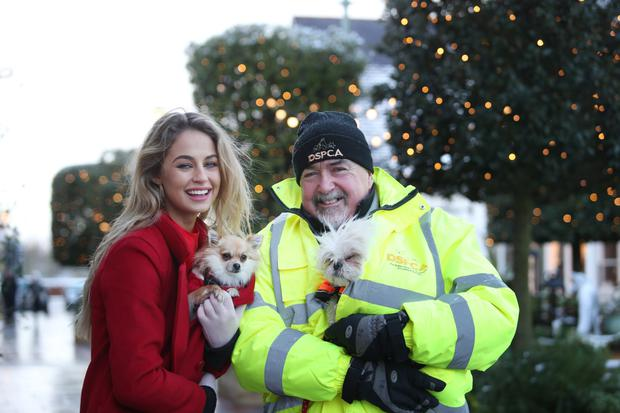 DSPCA ambassador Thalia Heffernan told of how important the charity is. Inset left, Thalia keeps little dog Zippy warm