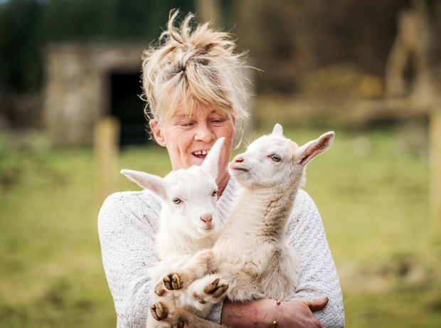 Angela Bermingham believes This and That are genuine goat/sheep hybrids, despite their rarity. Photo : Keith Heneghan / Phocus