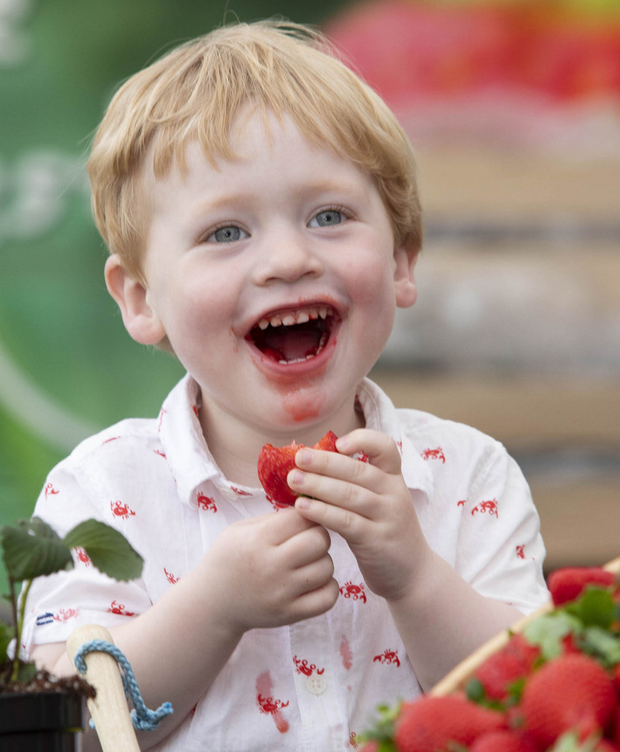 Leo Appleby (2) eats a strawberry at Bloom