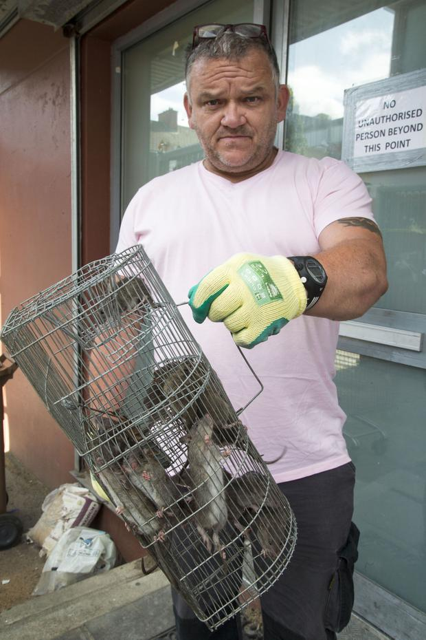 Local resident Paul Maguire with the rats caught in the cage-style trap