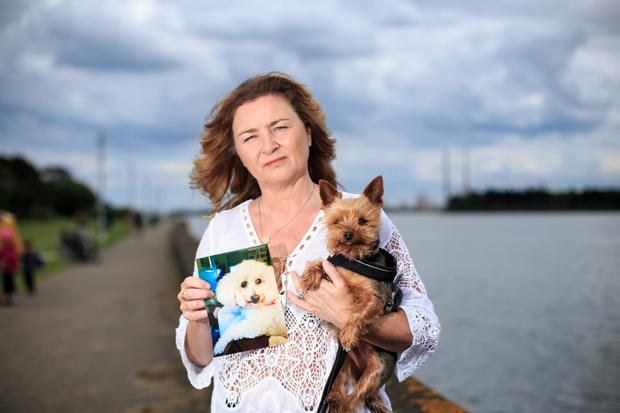 Deirdre Daly holding a photograph of her Bichon Frise dog Teddy, who was mauled by two Pit Bull dogs, also in picture is her dog Amber. Photo: Mark Condren