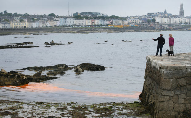 Surveying the polluted water at Sandycove Beach as an Irish heatwave is expected