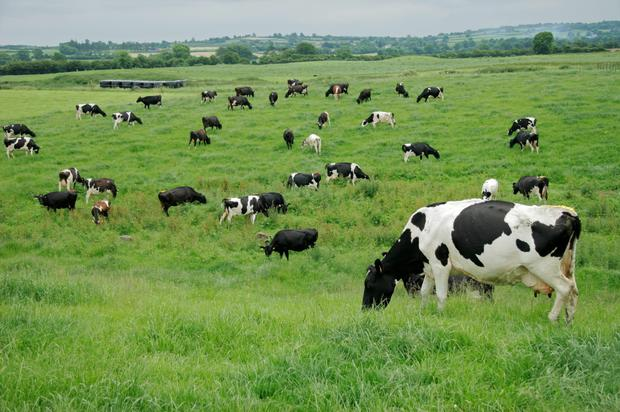 Ireland's dairy sector has a very low carbon footprint
