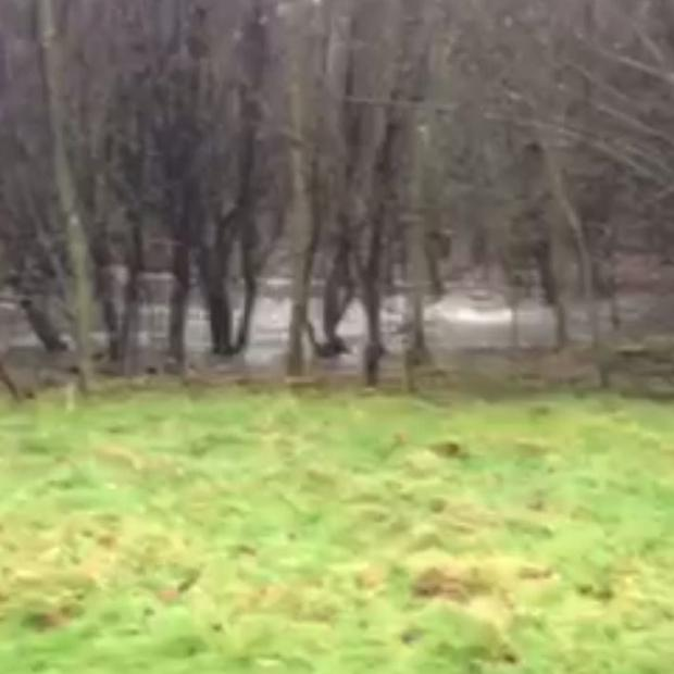 Raw sewage overflowing in Dodder Valley Park