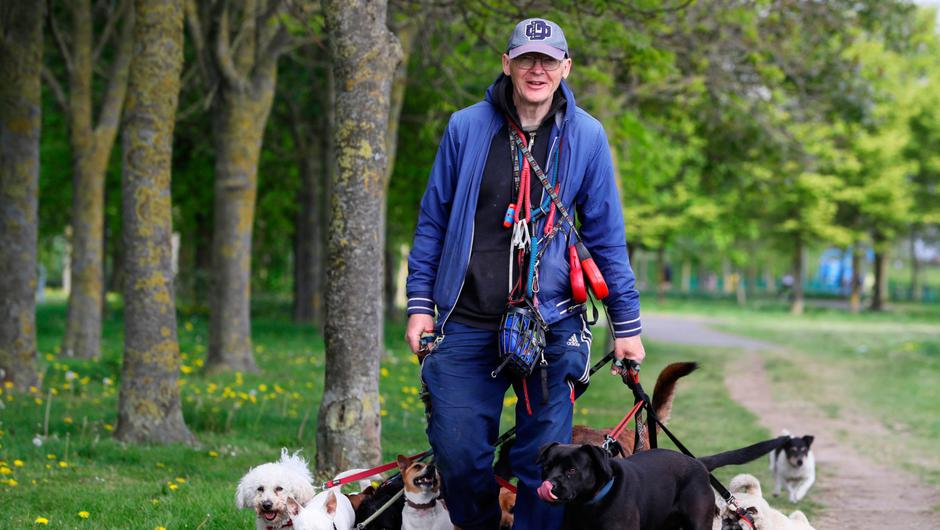 Gerry Atkinson walking dogs in a sunny Tolka Valley Park this week