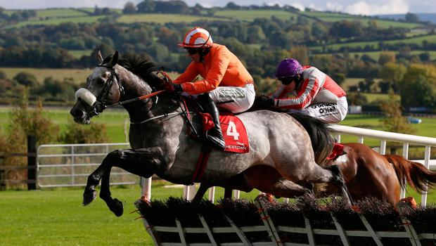 Labaik (No.4), which won a race at the Cheltenham Festival