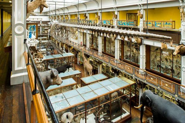 Renovation work will begin at the Natural History Museum