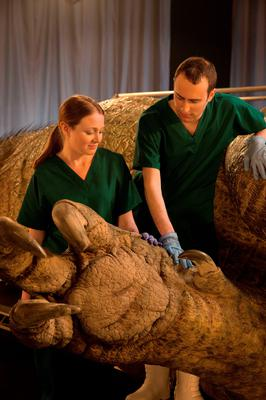Dr Tori Herridge and Dr Steve Brusatte examine a foot as they take part in an autopsy of an anatomically complete recreation of a Tyrannosaurus rex