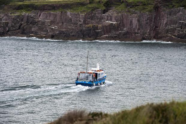 A search team at the cliffs at the mouth of Dingle harbour look for Fungie