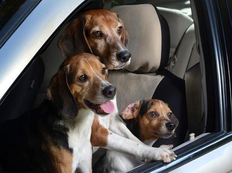 An NCT tester refused to test a woman's car because it stank of her three dogs.