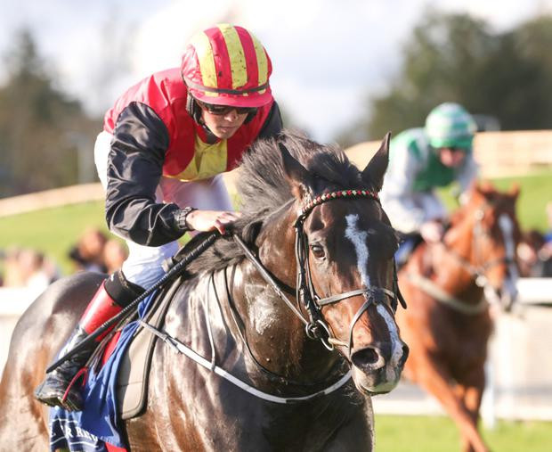 CHANCE: Njord could give Tom Madden the biggest win of his jockey career so far. Pic: Sportsfile
