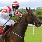 SOFT OPTION: Brex Drago can make the most of the going at Clonmel today. Photo: Alain Barr