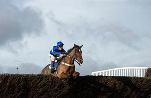 HIGH HOPES: Reserve Tank and Robbie Power will be aiming for success in the Novice Chase at Cheltenham today