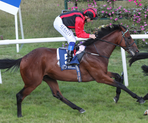 Joseph O'Brien's Will Be King can score success at Dundalk