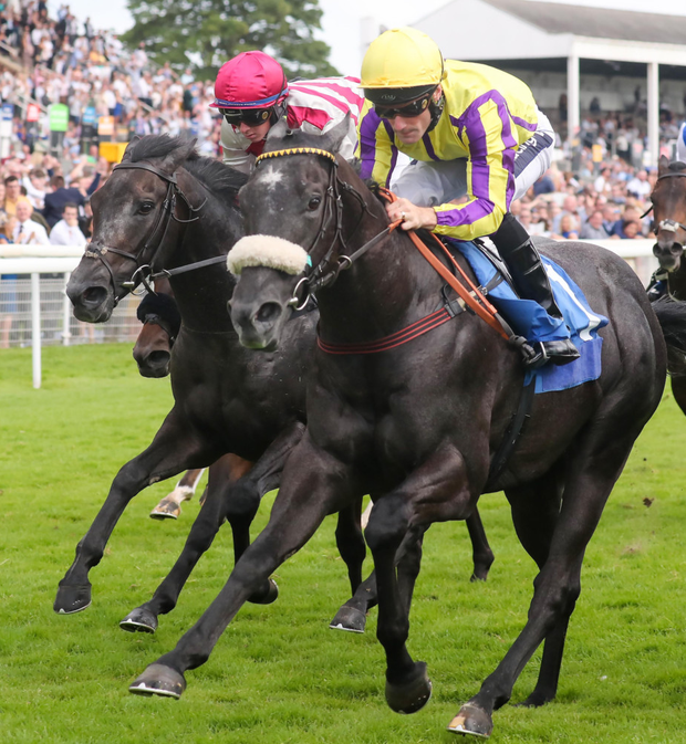 Redcar has been the target for Troubador