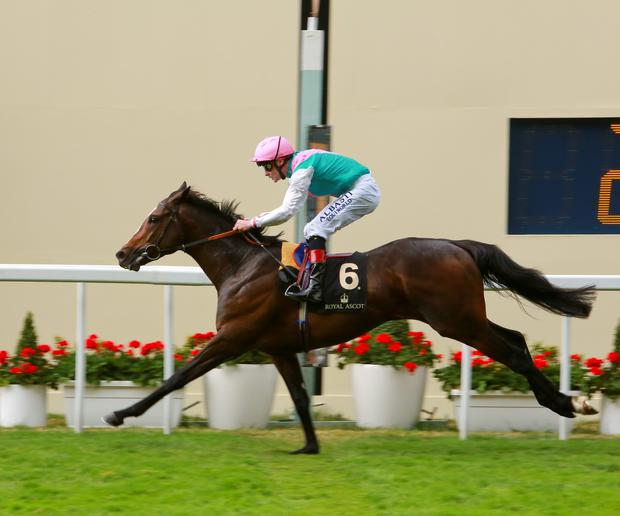 Pat Smullen wins The Hardwicke Stakes on board Snow Sky at Royal Ascot last month