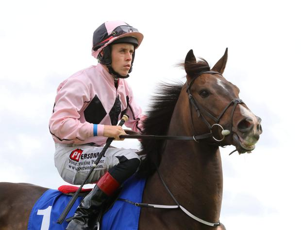 Ansgar will be out to defend his crown in the Park Stakes