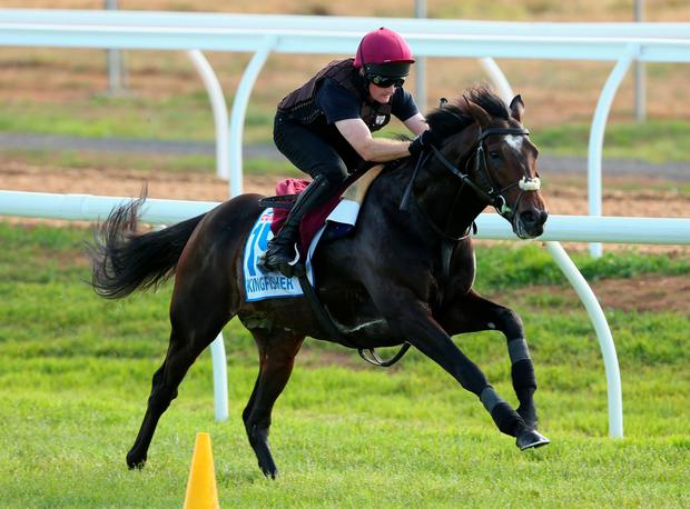 Aidan O'Brien's Kingfisher (pictured) has a better chance due to the draw compared with his other horse in the Emirates Melbourne Cup, Bondi Beach