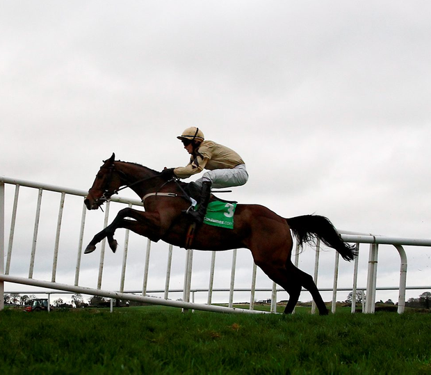 Nichols Canyon looks the pick of the small field from tomorrow's feature race at Leopardstown Photo:Patrick McCann