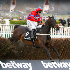 Sprinter Sacre (pictured) will take on Un De Sceaux again at Sandown tomorrow ©Cranhamphoto.com