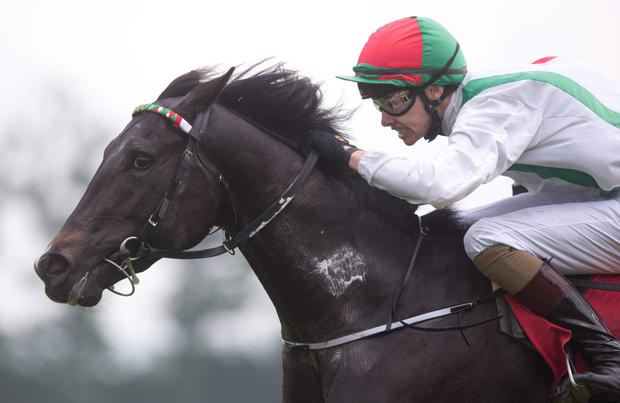 Joseph O'Brien's trains his first official winner with Justice Frederick and brother Donnacha riding in the Irish Stallion Farms EBF Maiden at Gowran Park. Pic: racingpost.com
