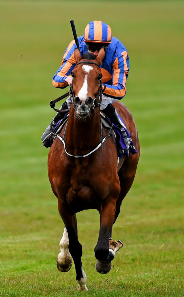 Aidan O'Brien's main Irish Derby hope Idaho. Photo: Ramsey Cardy/Sportsfile