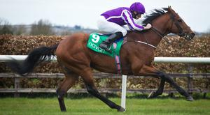 The Gurkha looks to be Aidan O'Brien's main horse for the Coral Eclipse. Pic: Racing Post