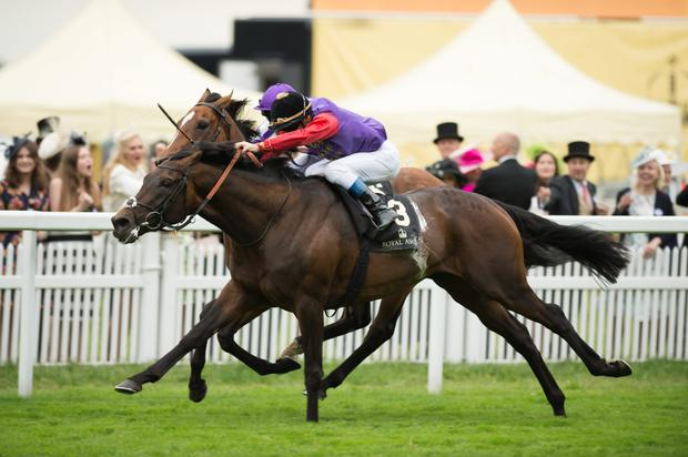 Olivier Peslier on board Dartmouth as they beat Highland Reel in the Hardwicke. They go head-to-head again today. Pic: racingpost.com